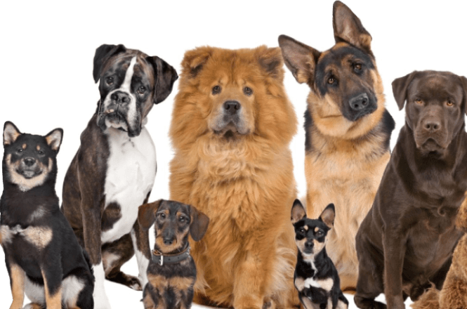 Dogs Exhibitions 2019
